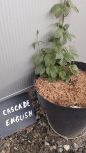 cascade_english_1