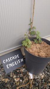 cascade_english_2